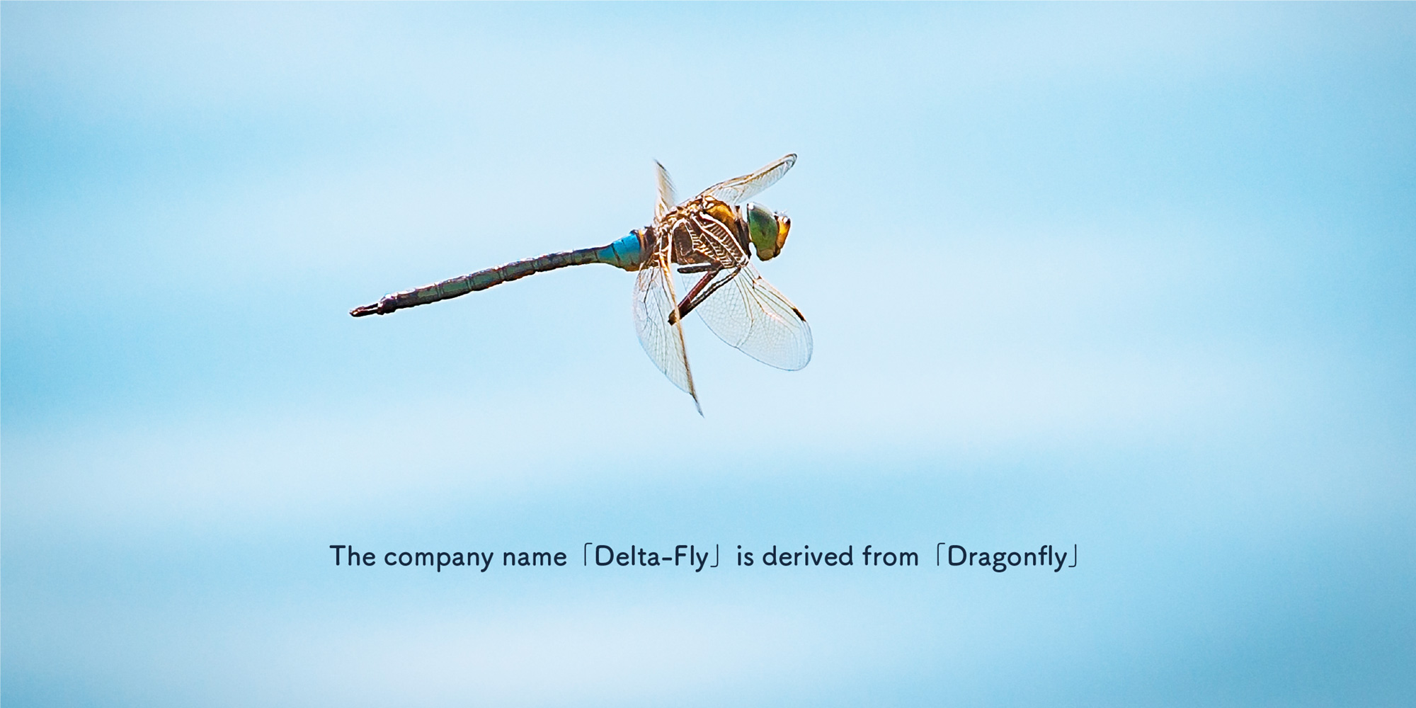 The company name 「Delta-Fly」 is derived from 「Dragonfly」